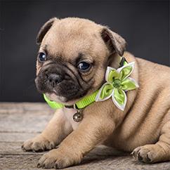 Puppy <br>Gallery