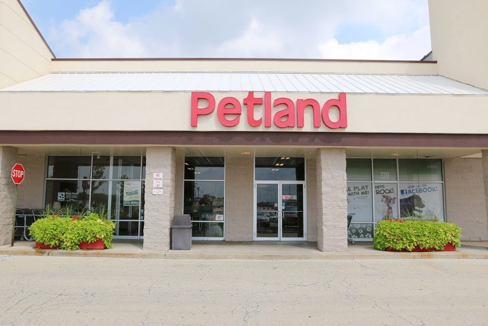 petland naperville puppies store and Dog Supplies