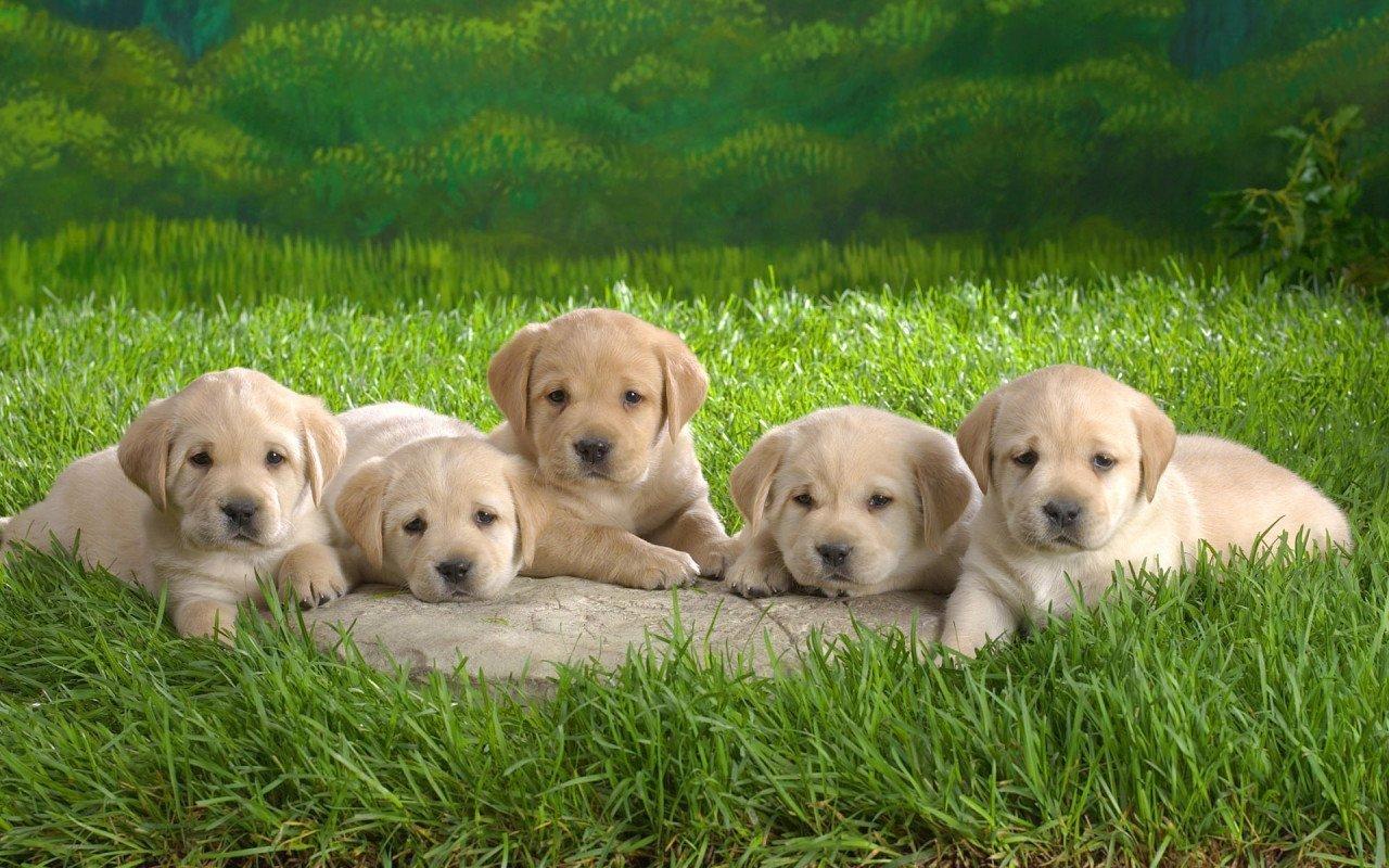 Puppies-puppies-16436771-1280-800