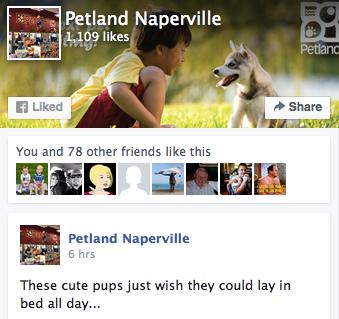 Petland Naperville Facebook