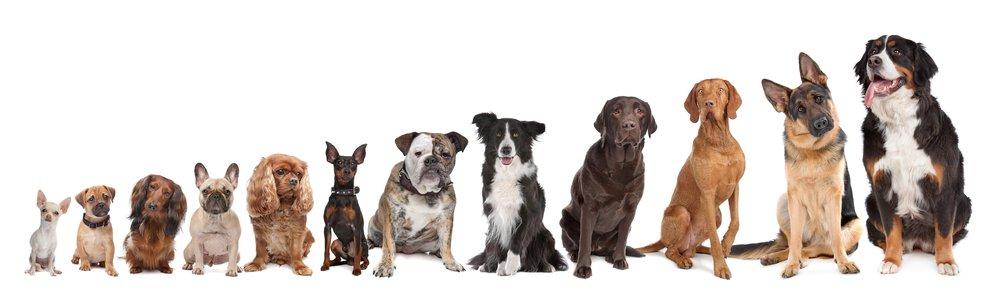 Petland Naperville Dog Breeds