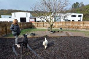 non-puppy mill breeder