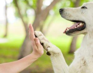 large dog petland