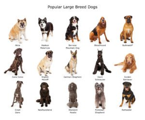large dogs-2 petland