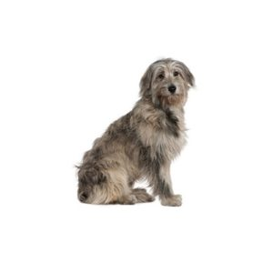 Popular Dog Breeds - Petland Kennesaw