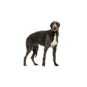 Popular Dog Breeds - Petland Kennesaw