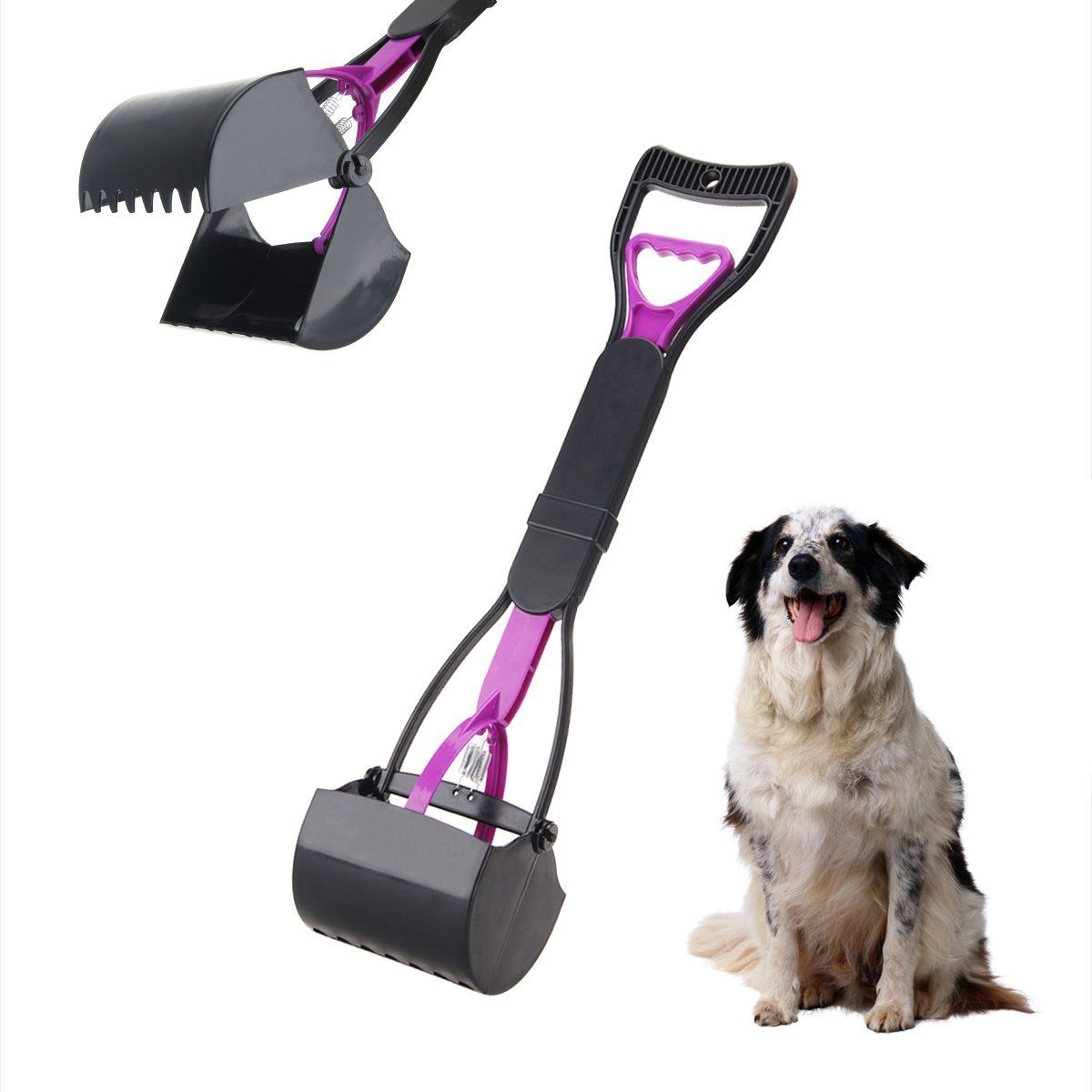 ALLEN SCOOPER SMALL DOG