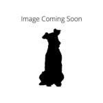 Petland Aurora Dandie Dinmont Terrier